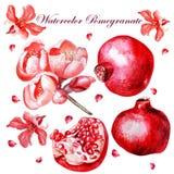 Belle aquarelle réglée avec des fruits et des fleurs Photo libre de droits