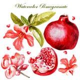 Belle aquarelle réglée avec des fruits et des fleurs Images libres de droits