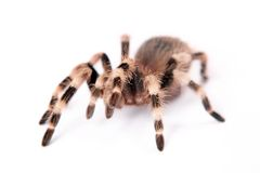 Belle araignée Photos stock