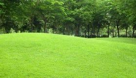 Belle arrière-cour en pente avec l'herbe et l'arbre dedans Photo stock