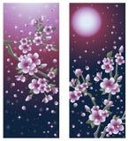 Belle bandiere di Sakura Immagine Stock
