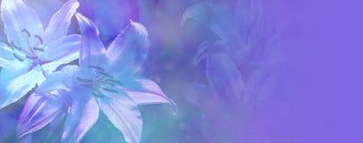 Belle bannière bleue de lis de mariage Images stock