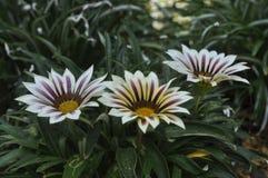 Belle beauté de fleurs fraîches de fleurs de nature Photographie stock libre de droits