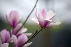 Belle belle orchidée chinoise de jade Photographie stock