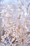 Belle branche couverte de la glace Images stock