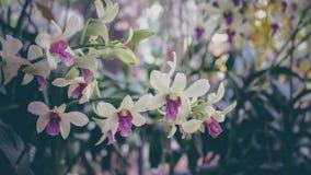 Belle branche d'orchidées Photo stock