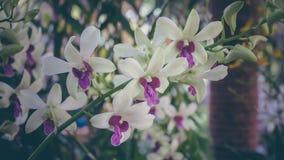 Belle branche d'orchidées Photos stock