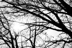 Belle branche noire et blanche avec un mauvais temps images libres de droits