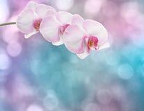Belle branche rose d'orchidée Photographie stock libre de droits