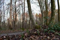 Belle campagne d'arbres image libre de droits