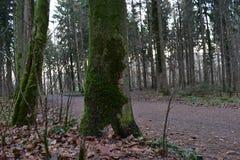 Belle campagne d'arbres images libres de droits