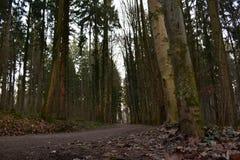 Belle campagne d'arbres image stock