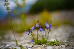 Belle campane blu fotografia stock