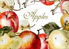 Belle carte avec des pommes Photos libres de droits