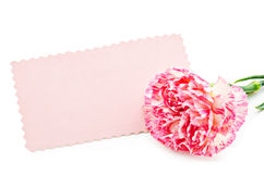 Belle carte rose vierge Images stock