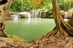 Belle cascade à écriture ligne par ligne dans la forêt Photographie stock