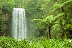 Belle cascade à écriture ligne par ligne en Australie tropicale Image libre de droits