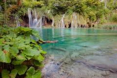 Belle cascade à écriture ligne par ligne tropicale Photo libre de droits
