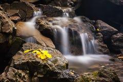 Belle cascade en montagnes carpathiennes Image stock