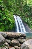Belle cascade sur l'île de la Guadeloupe Images libres de droits