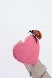 Belle coccinelle rouge marchant sur l'icône de coeur Photos libres de droits