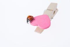 Belle coccinelle rouge marchant sur l'icône de coeur Photographie stock libre de droits