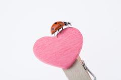 Belle coccinelle rouge marchant sur l'icône de coeur Image stock