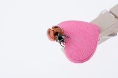 Belle coccinelle rouge marchant sur l'icône de coeur Photo libre de droits