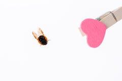 Belle coccinelle rouge marchant sur l'icône de coeur Images libres de droits