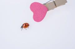 Belle coccinelle rouge marchant sur l'icône de coeur Photos stock