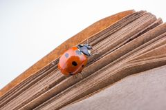 Belle coccinelle rouge marchant sur un carnet photos stock