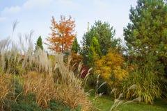 Belle colline alpine avec des arbres, des arbustes et des herbes ornementales en parc d'automne image stock