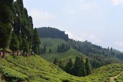 Belle colline di Darjeeling fotografie stock