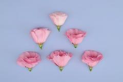 Belle composition avec des fleurs sur la carte de fond de couleur Photographie stock