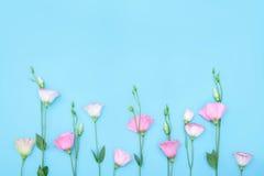Belle composition avec des fleurs sur le fond bleu Photos stock
