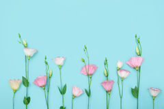 Belle composition avec des fleurs sur le fond de couleur du copie-espace Photographie stock libre de droits