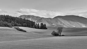 Belle composition en paysage noire et blanche photos libres de droits