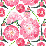 Belle composition florale de fines herbes tendre de pivoines roses avec les feuilles de vert et le modèle rouge de bourgeons Image stock