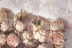 Belle composition molle en couleur avec les roses sèches Image libre de droits
