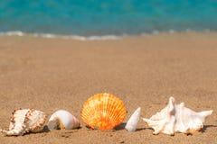 Belle conchiglie sulla sabbia allineata Fotografia Stock Libera da Diritti