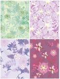 Belle configuration florale Image stock