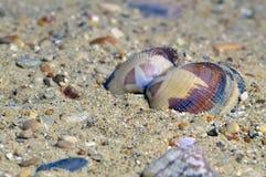 belle coquille sur la plage Images libres de droits