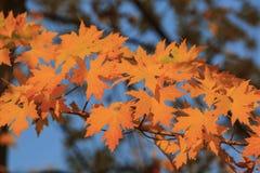 Belle couleur de chute au-dessus de région de gorge de chêne Images libres de droits