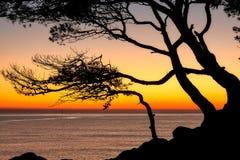 Belle couleur de lever de soleil au-dessus du côtier dans Costa Brava espagnol avec la silhouette de pin photographie stock