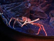 Belle couleur sous-marine colorée rougeoyante Photographie stock libre de droits