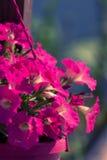 Belle décoration d'ornement de fleur sur la rue dehors Photographie stock libre de droits