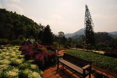 Belle décoration de jardin ; paysage photos stock