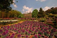 Belle décoration de jardin ; paysage Photographie stock libre de droits