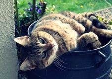 Belle détendant dans un pot de fleur Image libre de droits