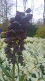 Belle de fleur étrange Images stock